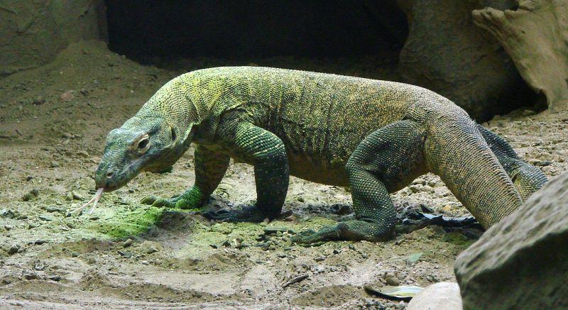 Indonesia: Protest against 'Jurassic Park' in Komodo ...